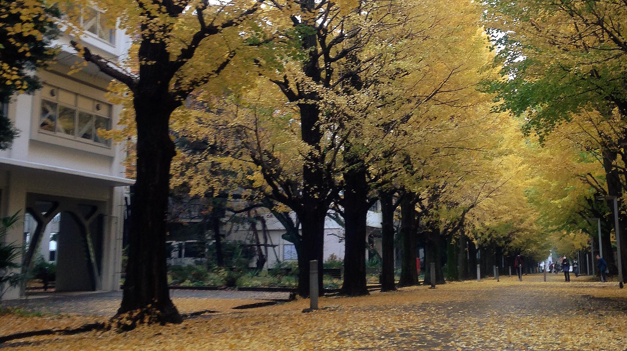 東京大学大学院総合文化研究科・教養学部付属 共生のための国際哲学 ...